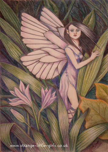 Faerie fantasy art by Jo Hards 'Tansy's Secret'